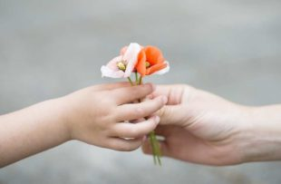 Parents hands handing poppy flowers