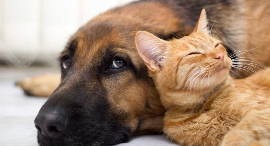 Dog and cat lying on floor together.